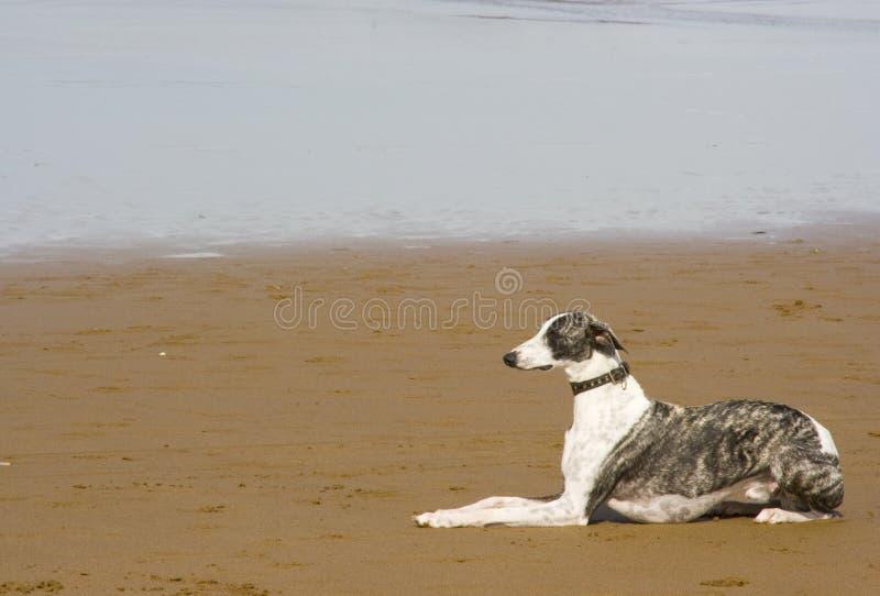Het dierlijke huisdier van de hond stock foto