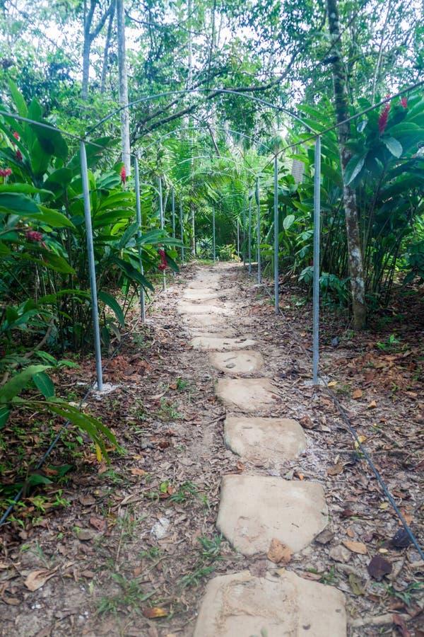 Het Dierlijke Weeshuis Pilpintuwasi van Amazonië royalty-vrije stock foto