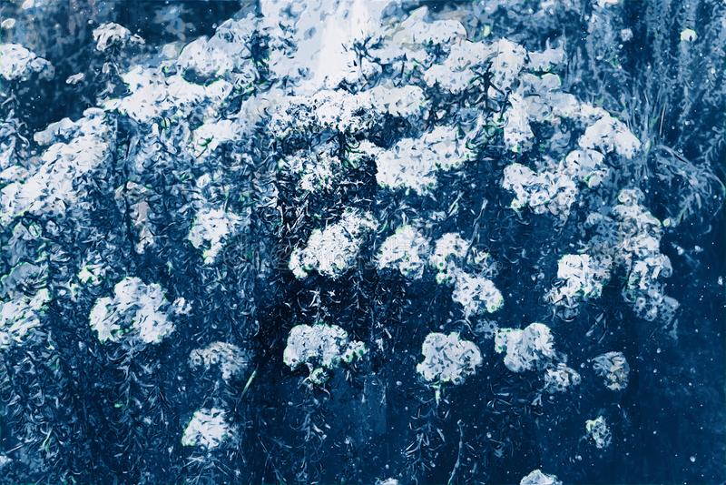 Het digitale schilderen van bloemen in blauwe toon stock illustratie