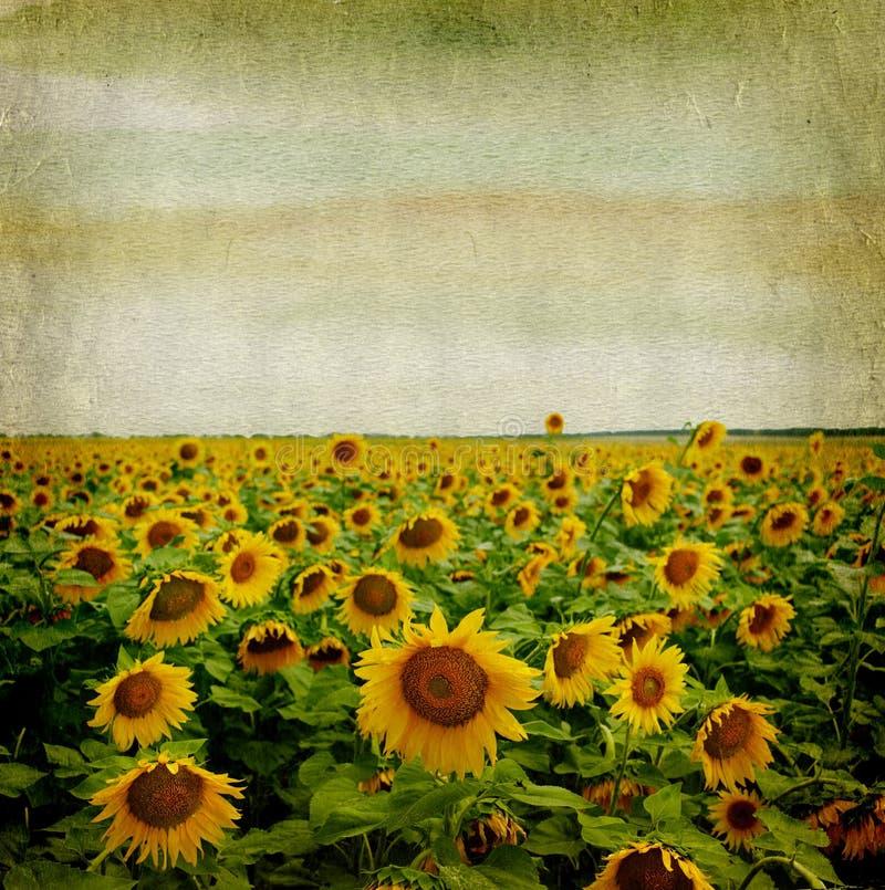 Het document van Grunge achtergrond met zonnebloem stock foto
