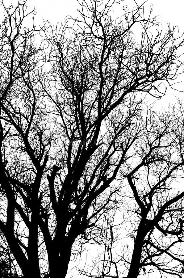 Het dode boomsilhouet zonder doorbladert geïsoleerd royalty-vrije illustratie