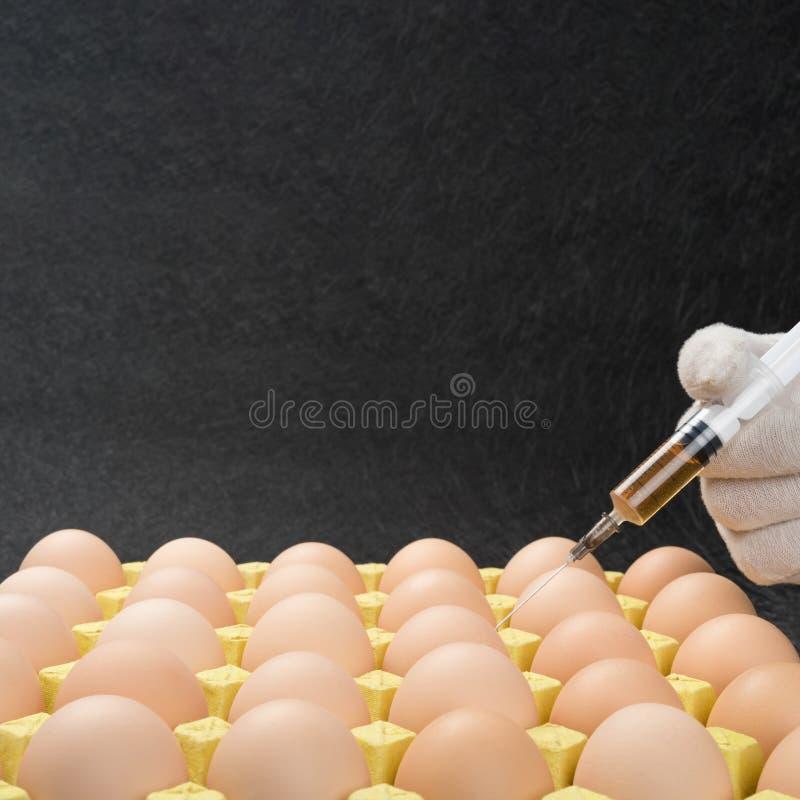 Het doen van injectie door medische spuit aan eieren royalty-vrije stock afbeelding