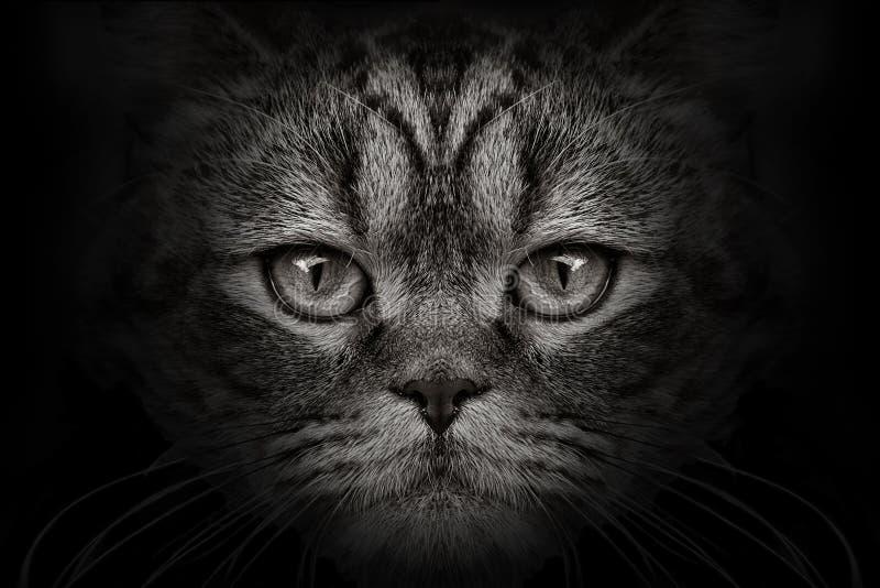 Het donkere close-up van de snuitkat Front View stock foto's