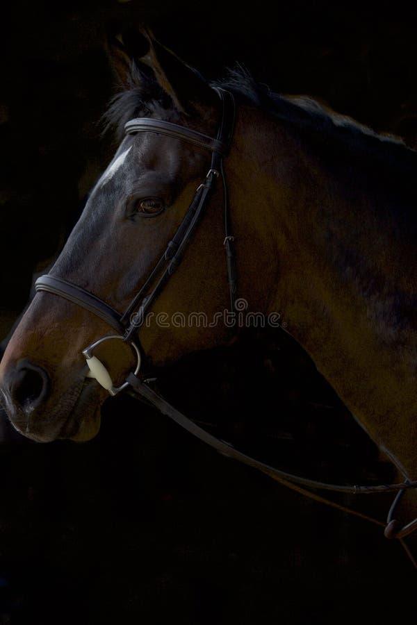 Het Donkere Paard stock foto