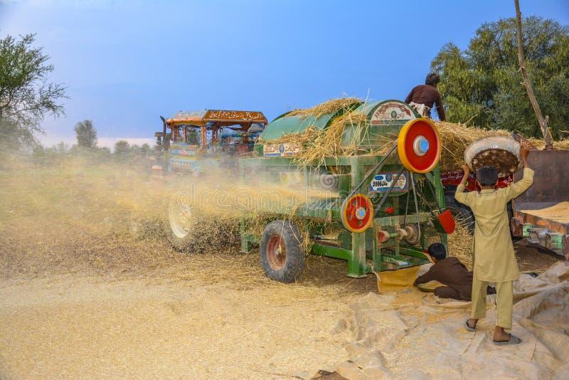 Het dorsen van tarwe in een dorp royalty-vrije stock foto