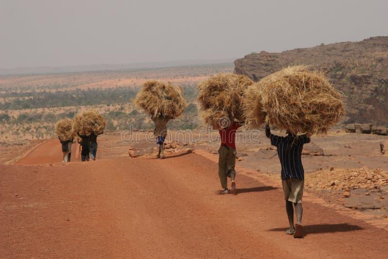 Het dragende hooi van de mens in Afrika stock fotografie