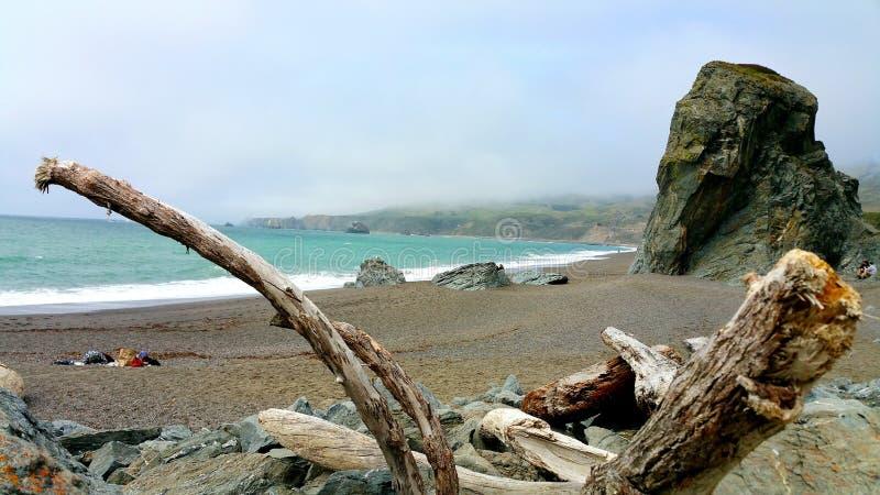 Het drijfhout registreert kader Oceaankust stock foto