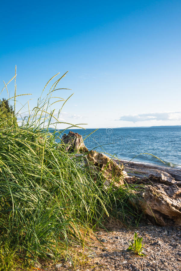 Het Drijfhout van het strandgras royalty-vrije stock foto