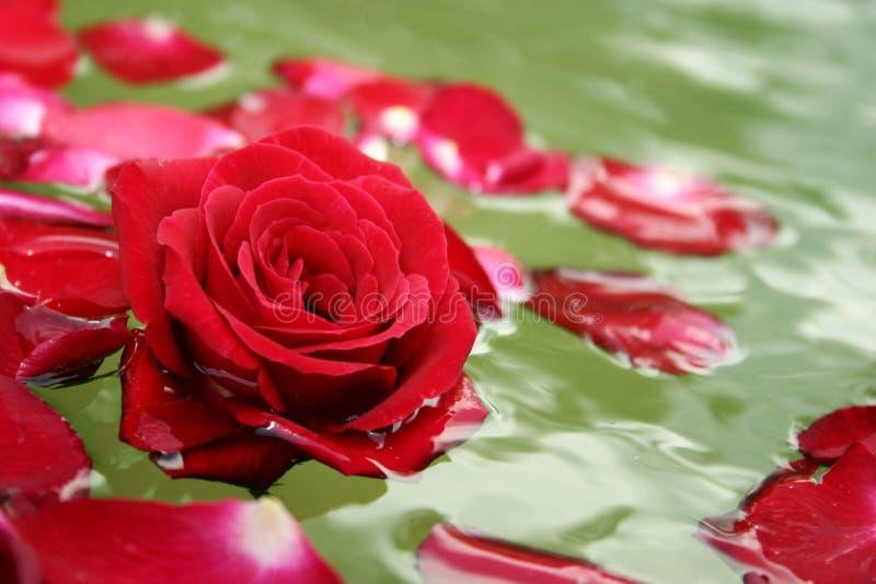 Het drijven nam bloemblaadjes toe royalty-vrije stock afbeeldingen