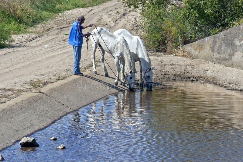 Het drinken paarden in waterbassin, Andalusia, Spanje royalty-vrije stock afbeeldingen