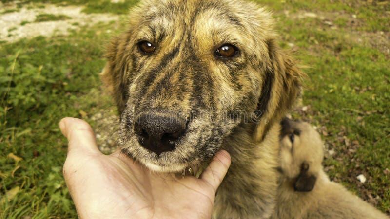 Het droevige gezicht van de hond royalty-vrije stock foto's