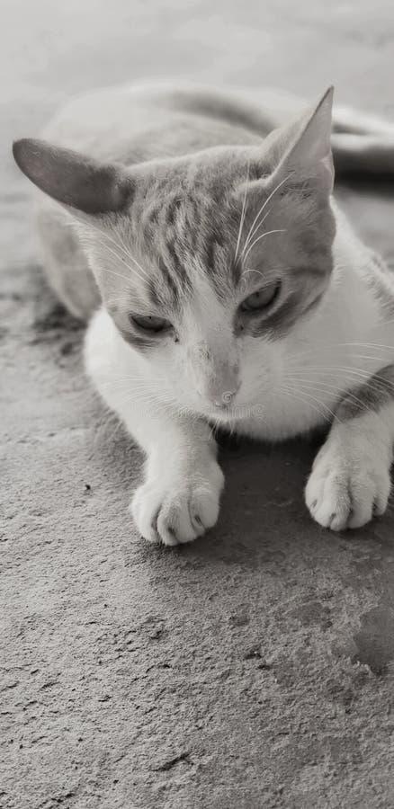 Het droevige kat zwart-wit liggen royalty-vrije stock afbeeldingen