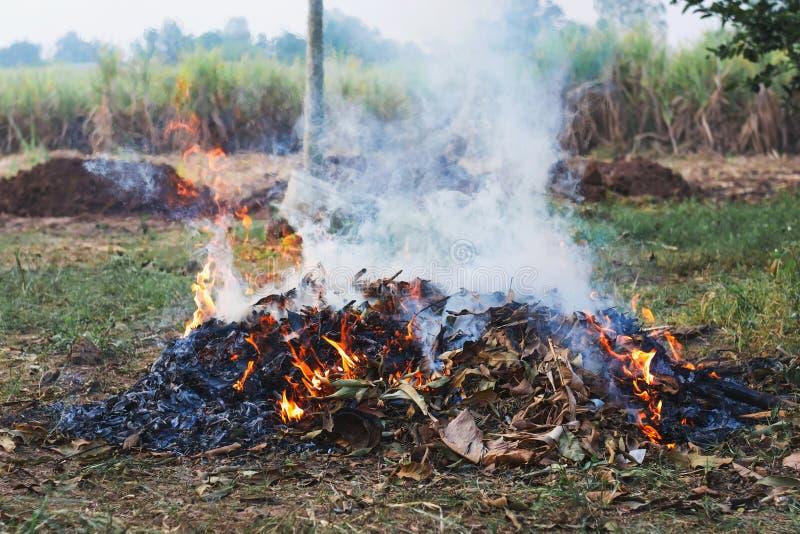 het droge blad van de brandwondbrand stock fotografie