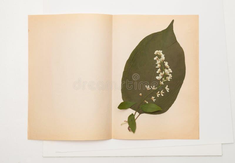 Het droge blad van sering en vogelkers bloeit op blad van oud document stock afbeeldingen