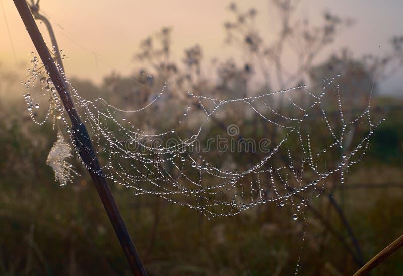 Het droge gras en het spinneweb in dauwdalingen sluiten omhoog royalty-vrije stock foto