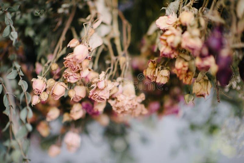 het droge herbarium van bloemen sluit omhoog Het herbarium van bloemen sluit omhoog stock foto