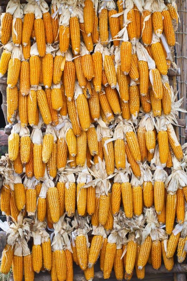 Het drogen van het graan. Na oogst stock afbeelding