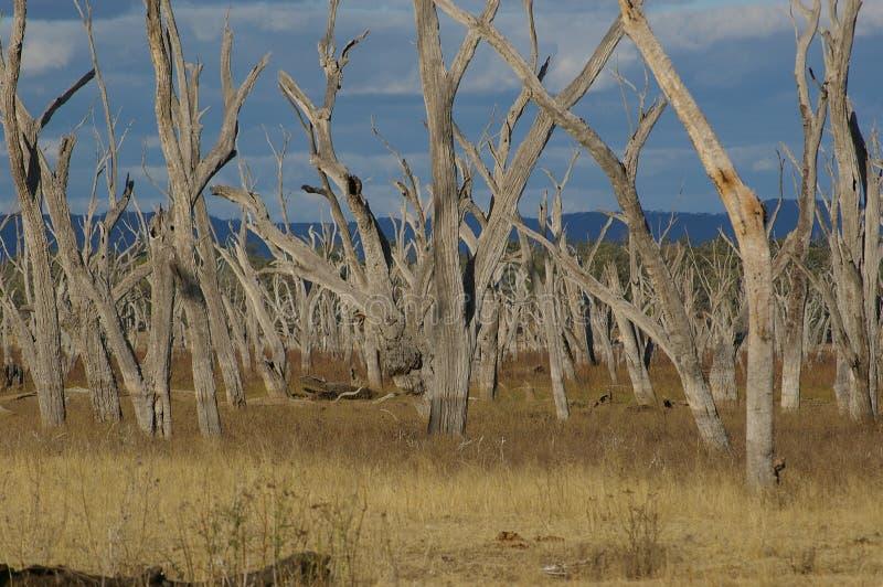 Het drogen van Nuga Nuga van het meer royalty-vrije stock foto's
