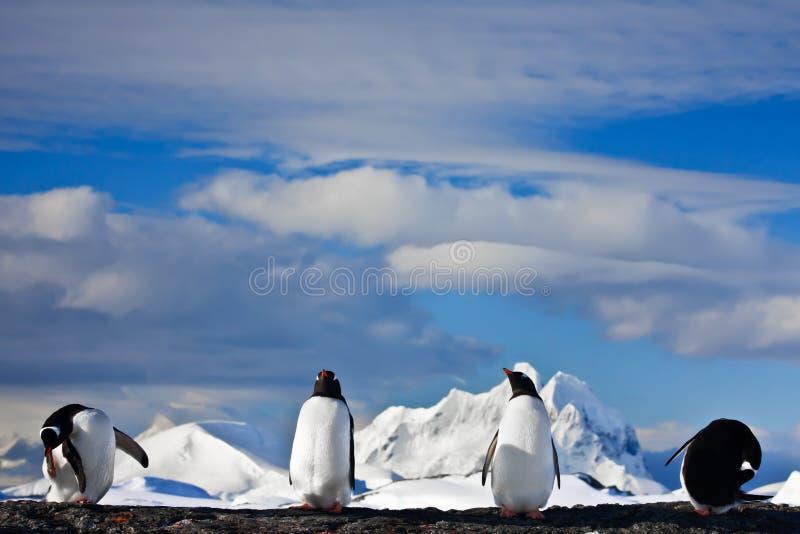 Het dromen van pinguïnen stock foto