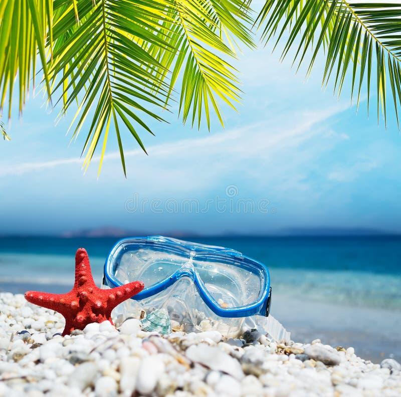 Download Het Duiken Masker Onder De Palm Stock Foto - Afbeelding bestaande uit kust, shell: 54086314
