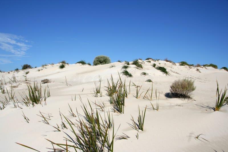 Het Duin van het zand en Hemel stock foto's