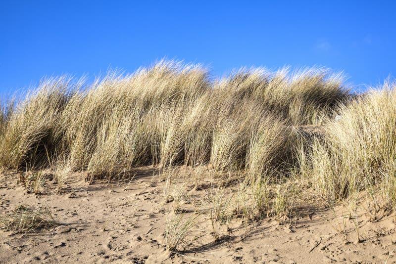 Het duin van het zand royalty-vrije stock afbeeldingen