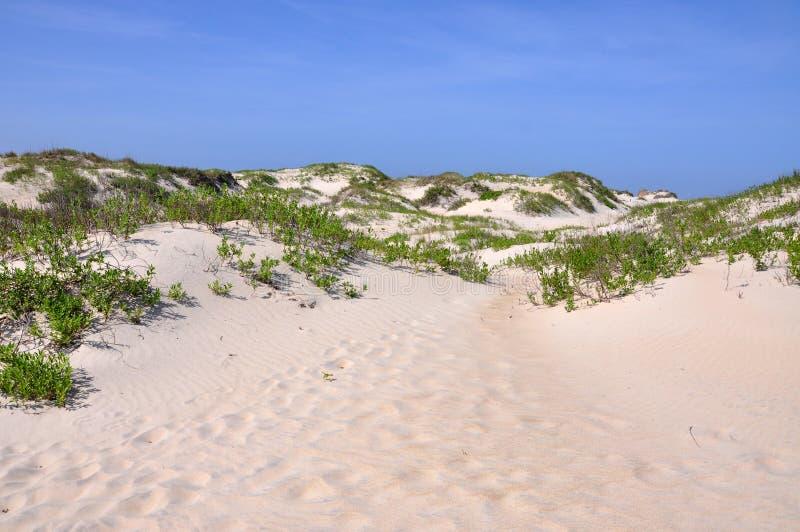 Het Duin van het zand in Kaap Hatteras, Noord-Carolina stock afbeelding