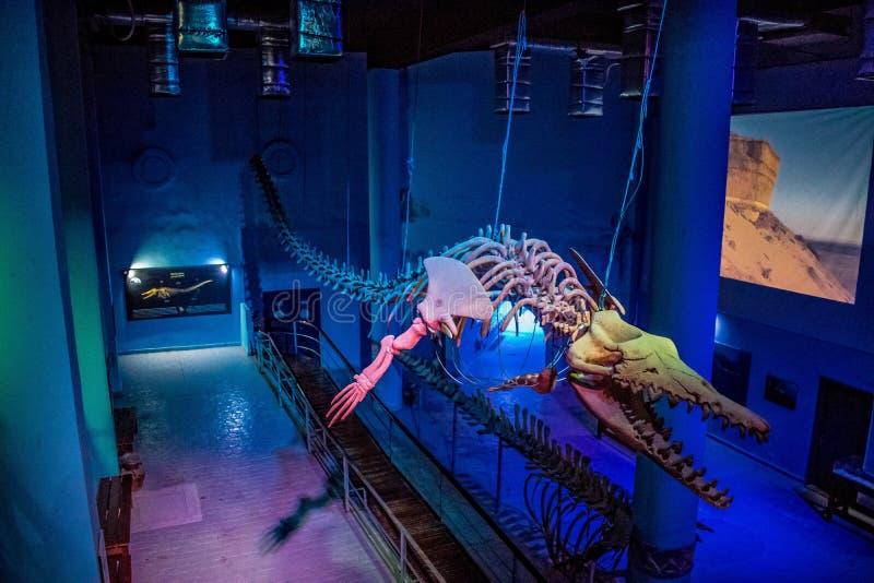 Het echte skelet van de Basilosaurusdinosaurus, Egypte stock foto's
