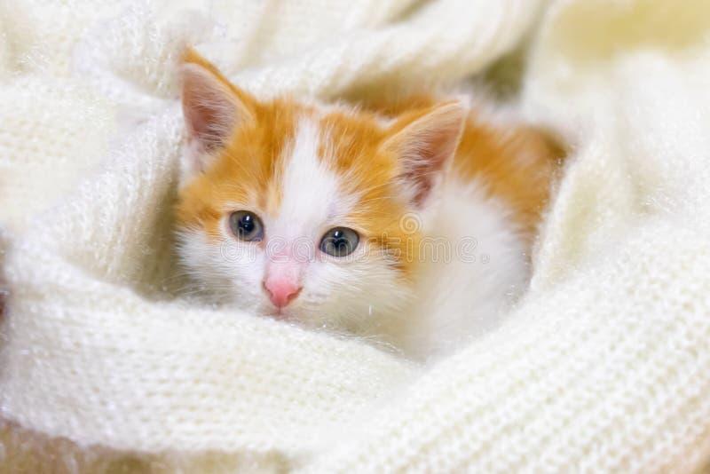 Het een weinig rood-witte katje ligt op een lichte pluizige deken royalty-vrije stock afbeeldingen