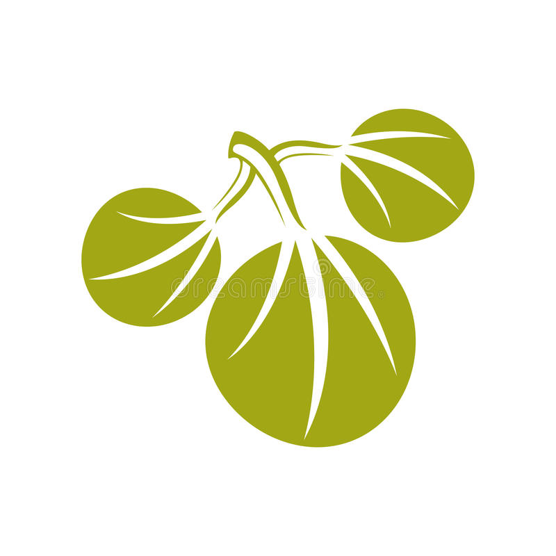 Het eenvoudige vectorpictogram van het de drie lenteblad, aard en het tuinieren thema vector illustratie