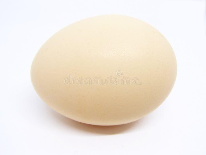 Het ei van de kip op witte achtergrond stock afbeelding