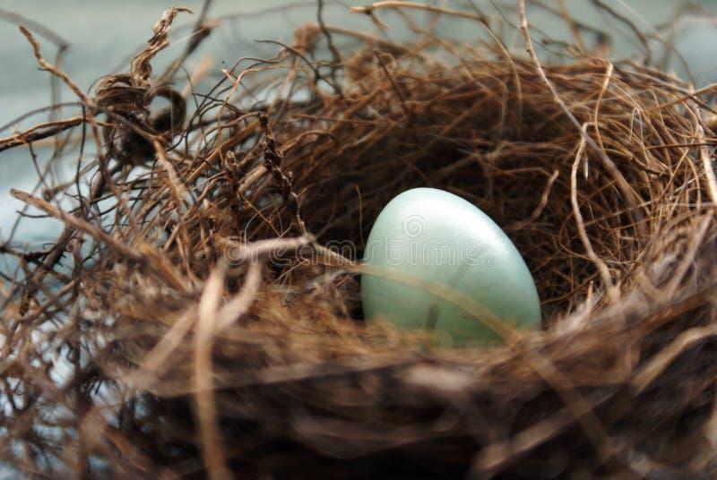 Het Ei van het Robinsnest stock foto