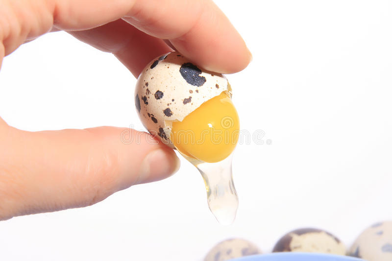 Het ei van kwartels stock afbeelding