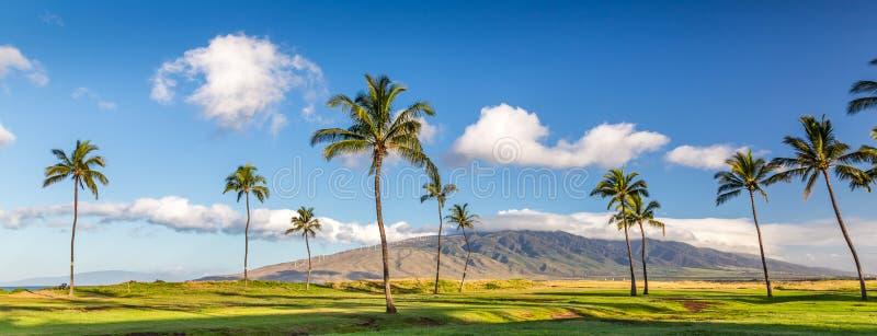 Het Eiland Maui, Hawaï stock afbeeldingen