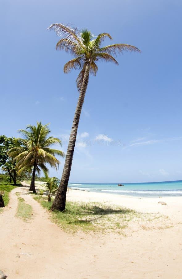 Het Eiland Nicaragua van het Graan van het Strand van Paraiso van het Punt van Waula stock fotografie