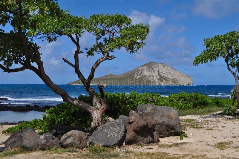 Het Eiland Oahu van het konijn royalty-vrije stock afbeeldingen