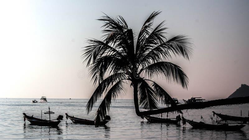 Het eiland Suratthani Thailand van de Siluateschildpad royalty-vrije stock foto