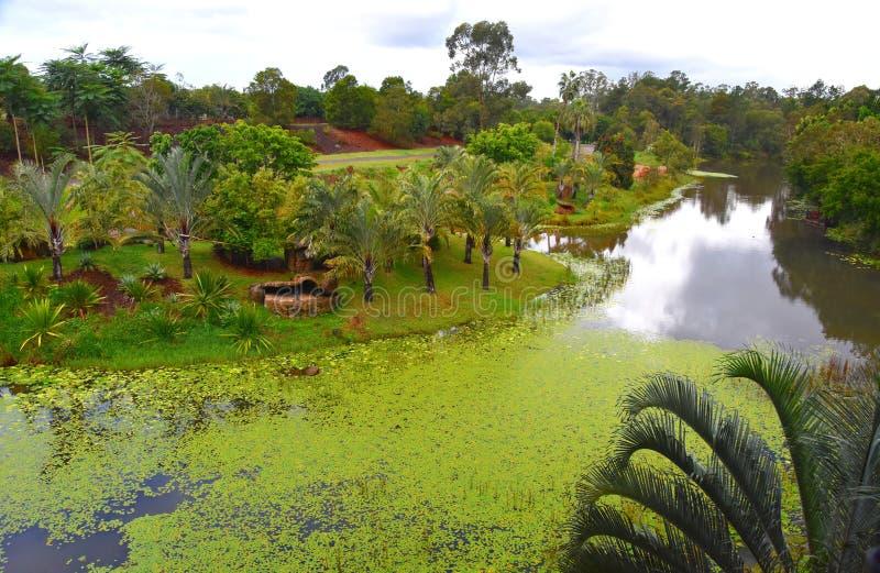 Het Eiland van Bindi is een drie-verhaal treehouse royalty-vrije stock afbeeldingen