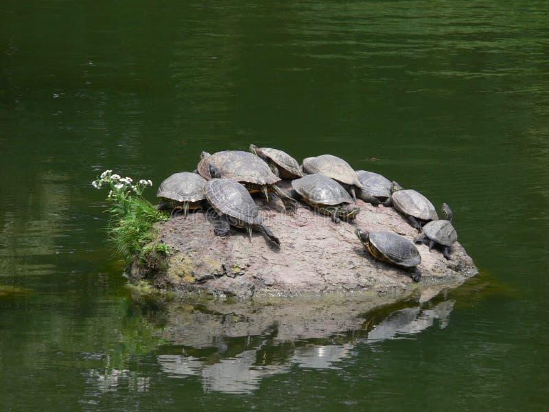 Het eiland van de schildpad stock fotografie