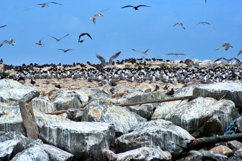 Het Eiland van de vogel stock afbeeldingen