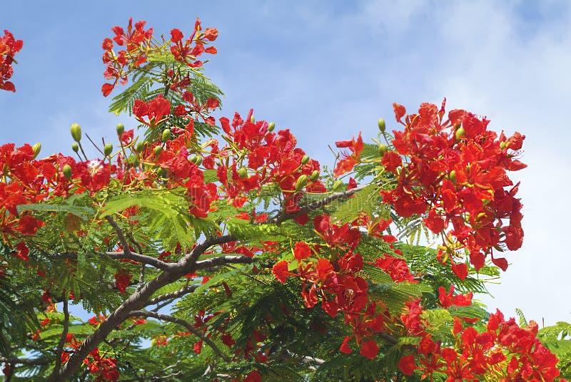 Het Eiland van Fiji, royalty-vrije stock afbeelding