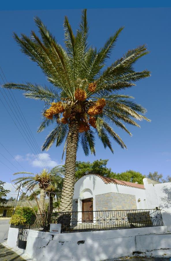 Het Eiland van Griekenland, Kreta, Palm royalty-vrije stock foto's
