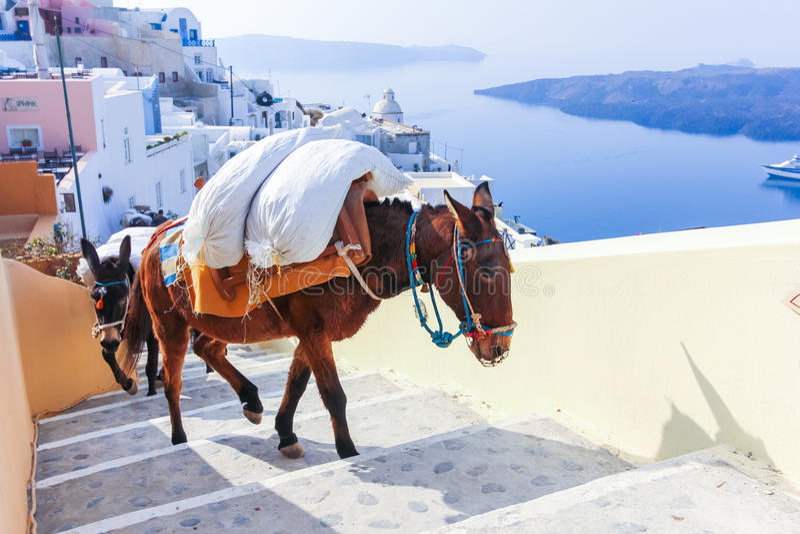 Het eiland van Griekenland Santorini in de ezels van Cycladen stock afbeeldingen