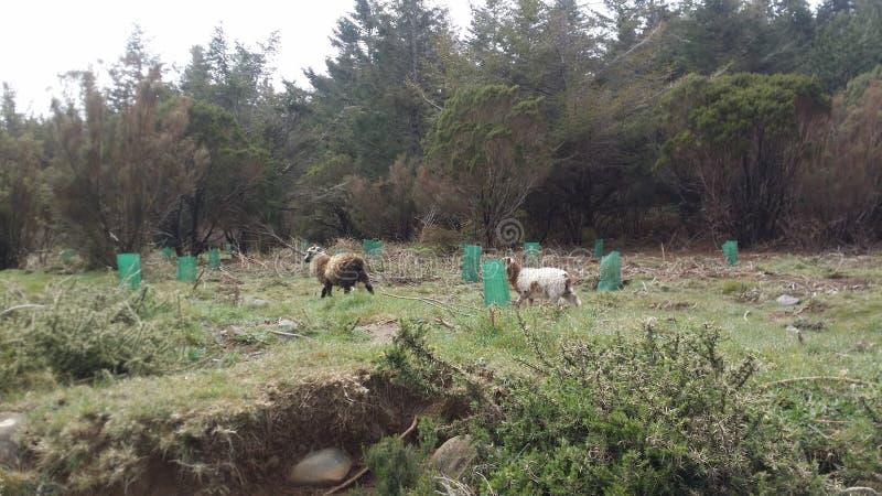 Het Eiland van madera stock fotografie