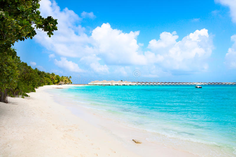 Het eiland zandig strand van de Maldiven stock afbeeldingen