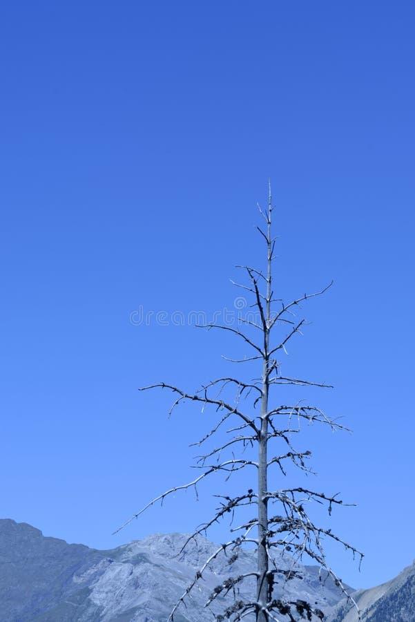 Het eind van een boom stock foto