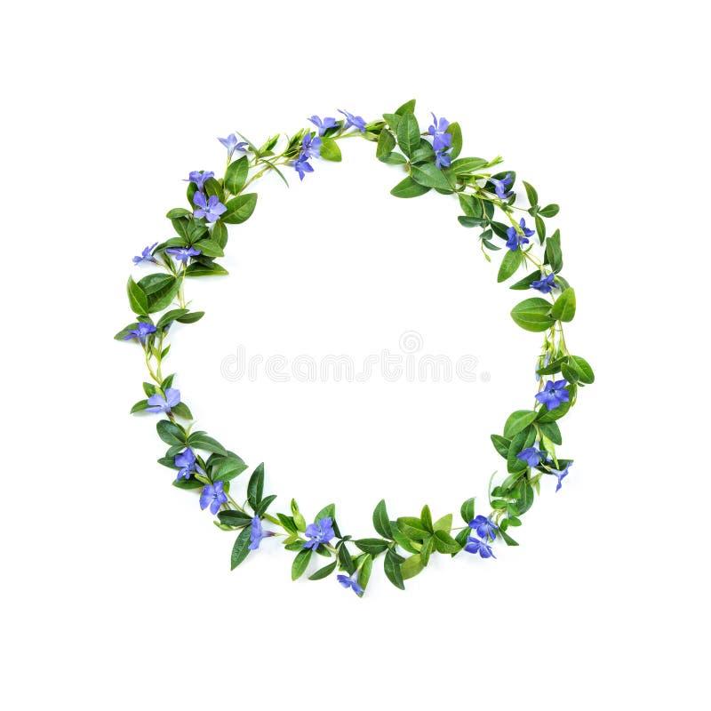 Het element van decor Een cirkel van maagdenpalm bloeit op een wit geïsoleerde achtergrond Groene en purpere kleuren royalty-vrije illustratie
