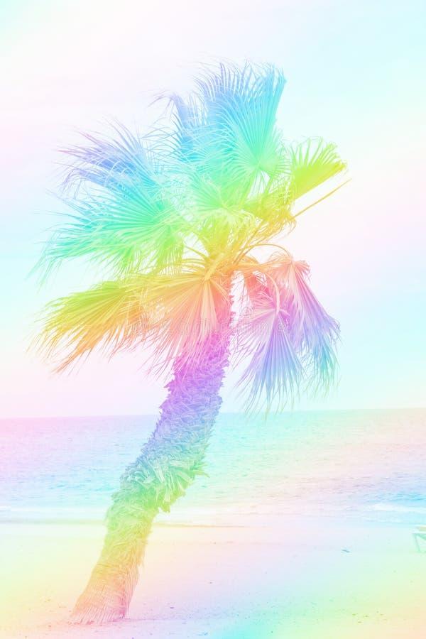 Het enige palm groeien op een strand Turkooise overzeese blauwe hemel Het mooie regenboogkleuren stemmen De tropische pret van de stock foto