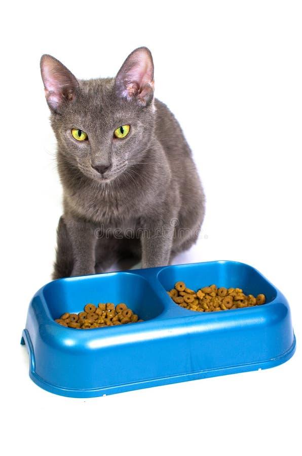 Het eten van de kat stock afbeeldingen