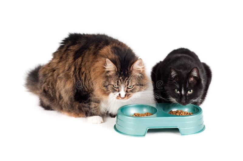 Het eten van katten stock afbeeldingen